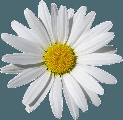 flores que cambian tu vida
