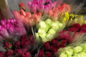 Rosas de colores Sevilla