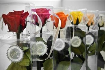Rosas eternas Dos Hermanas