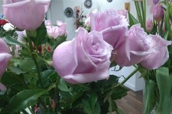 Rosas rosas Dos Hermanas