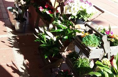 plantas para feria